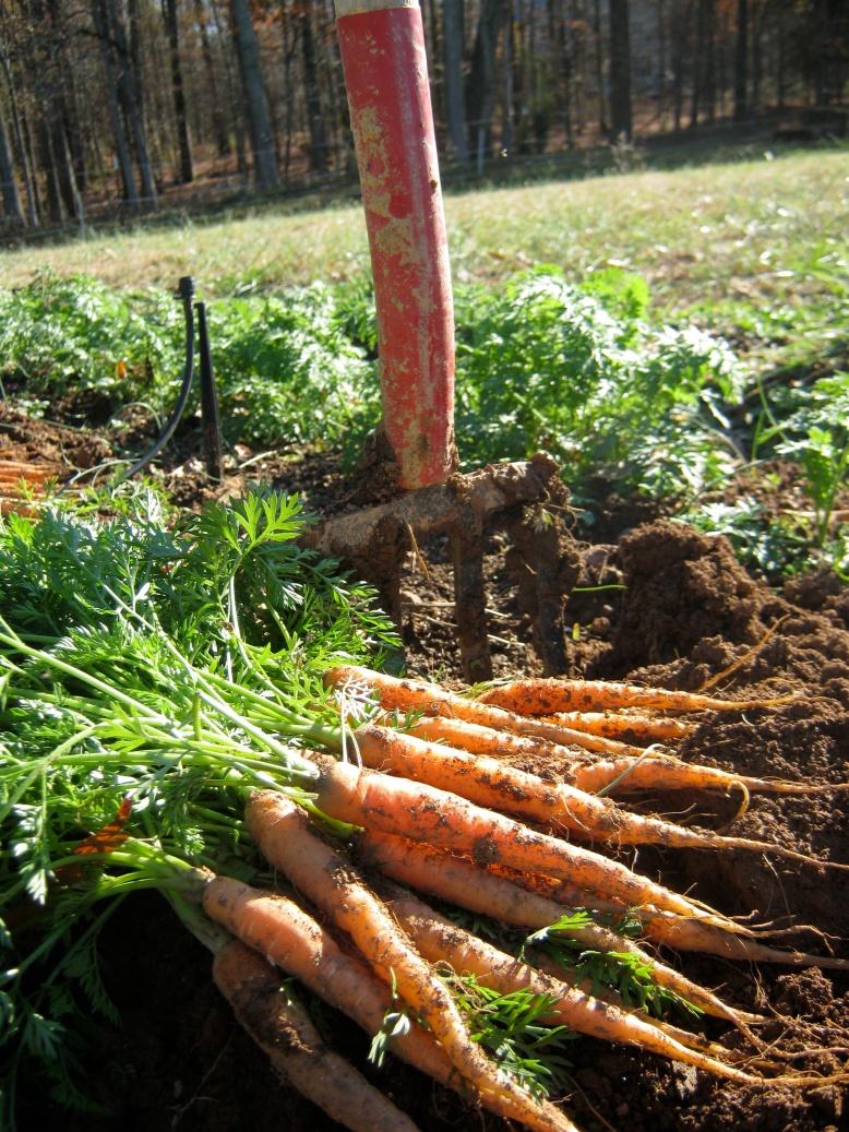 carrots:fork