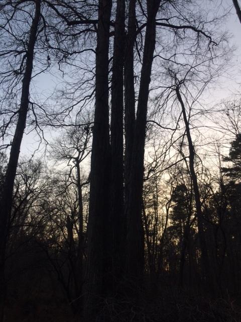 winter-tree-pic